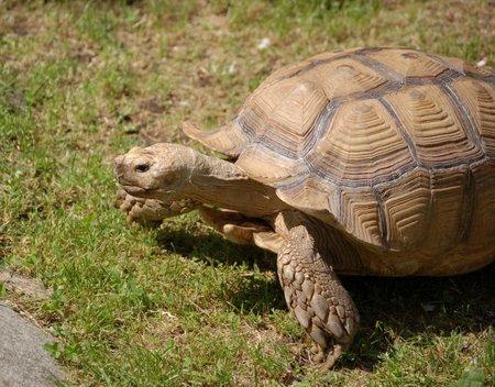 Turtle3m